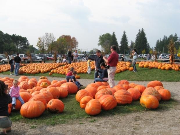 pumpkin_festival1377012854-1